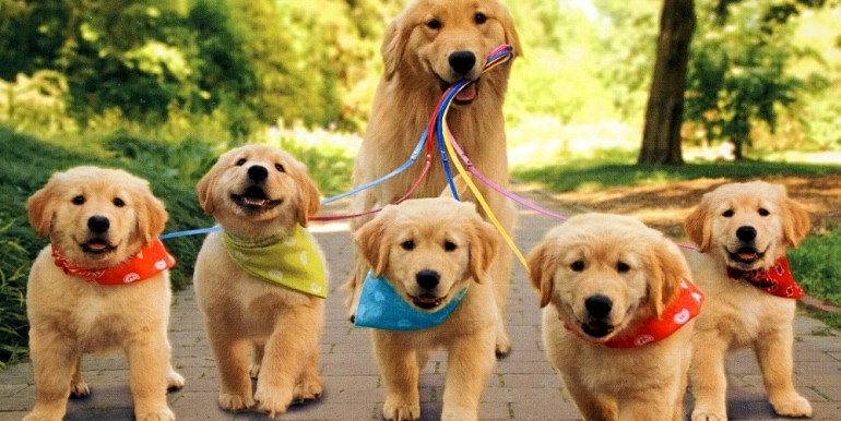 tumblr_static_mom-dog-with-puppies